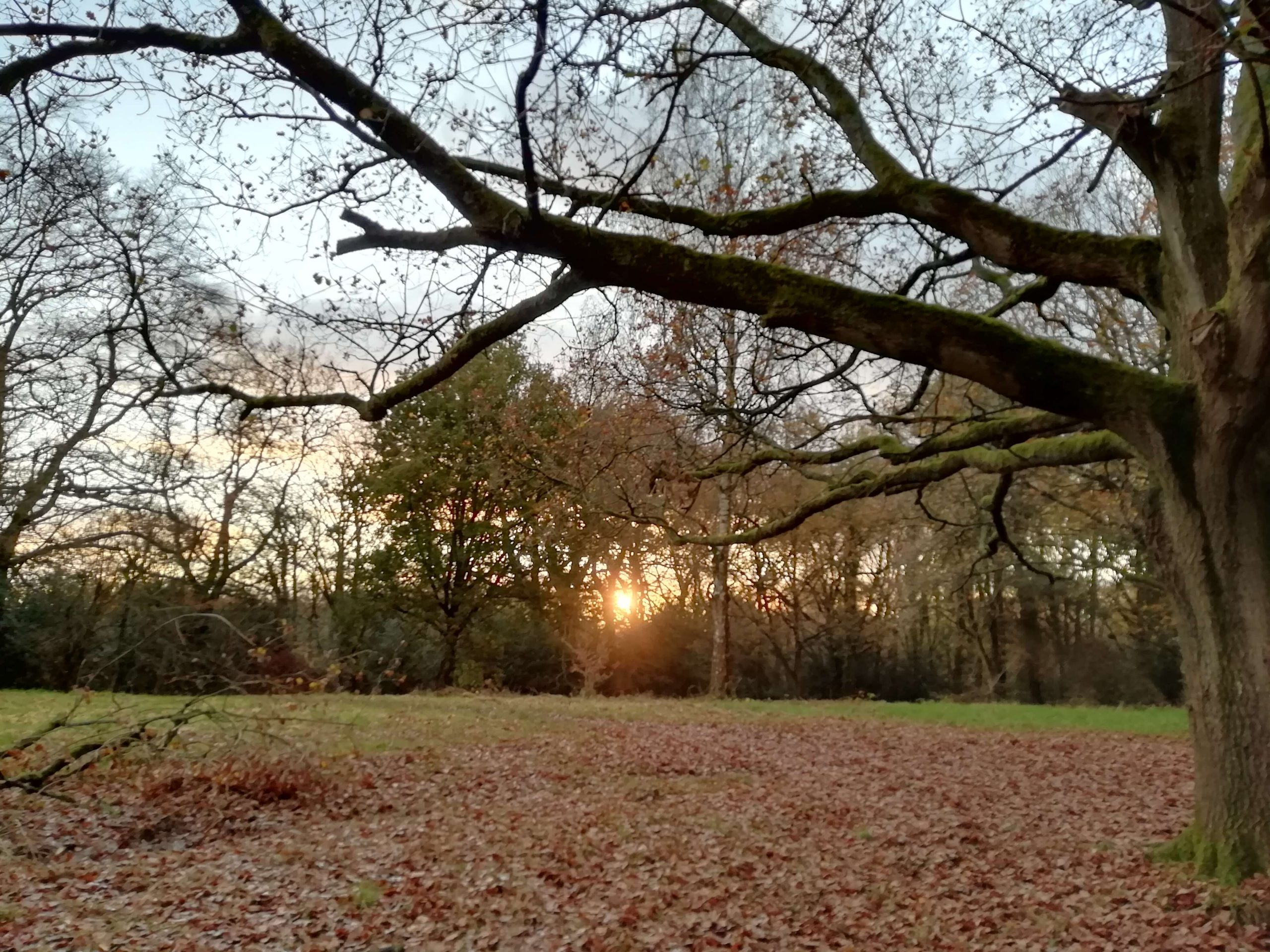 close up of tree branches with sunset setting in trees behind