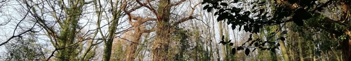 view of the tree in the woods uk